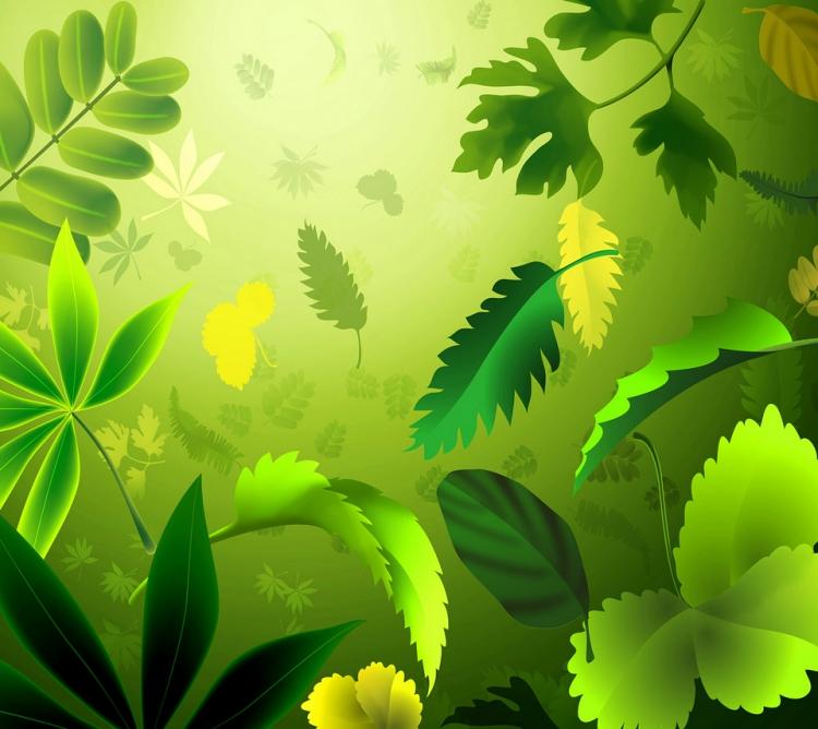 热带雨林_(790538.1).jpg