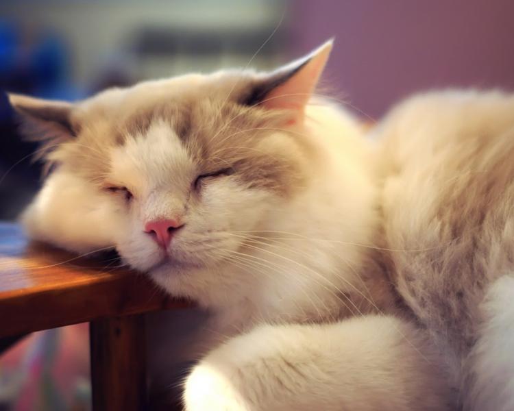 懒猫睡着了_(794131.1).jpg