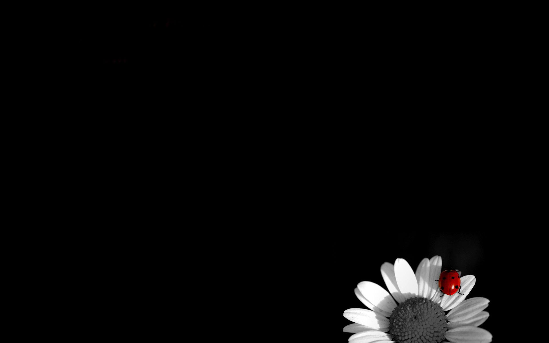black-wallpaper-8.jpg