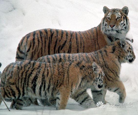 三只老虎跑得快.JPG