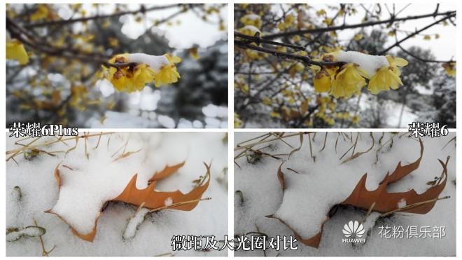 荣耀6plusvs荣耀6-微距拍照对比.jpg