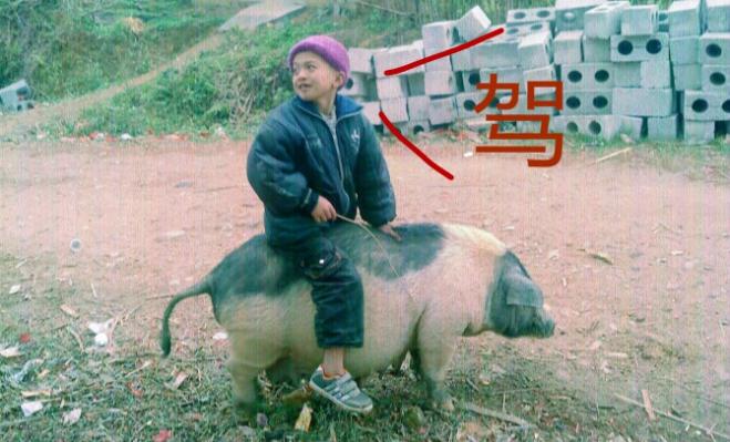 骑猪1_meitu_4_meitu_11.jpg