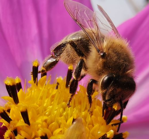 m20x蜜蜂-放大.png