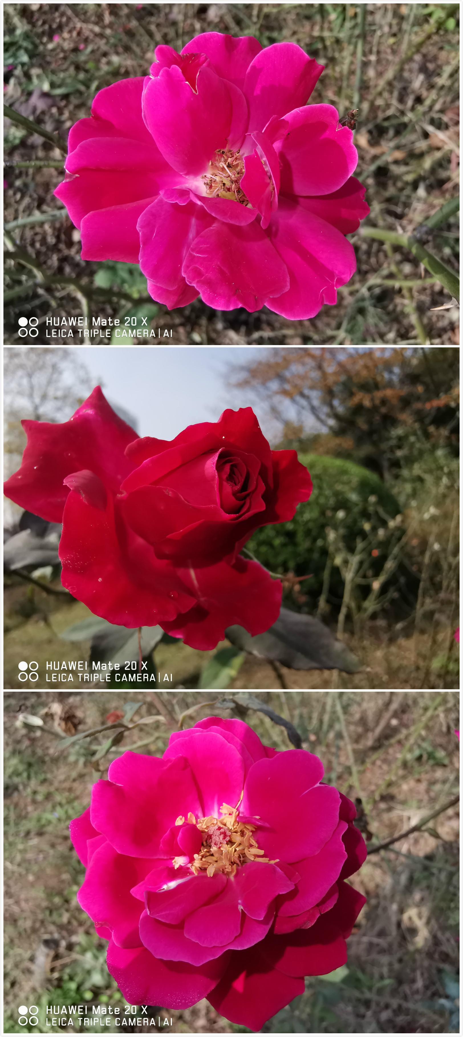 花朵2.jpg