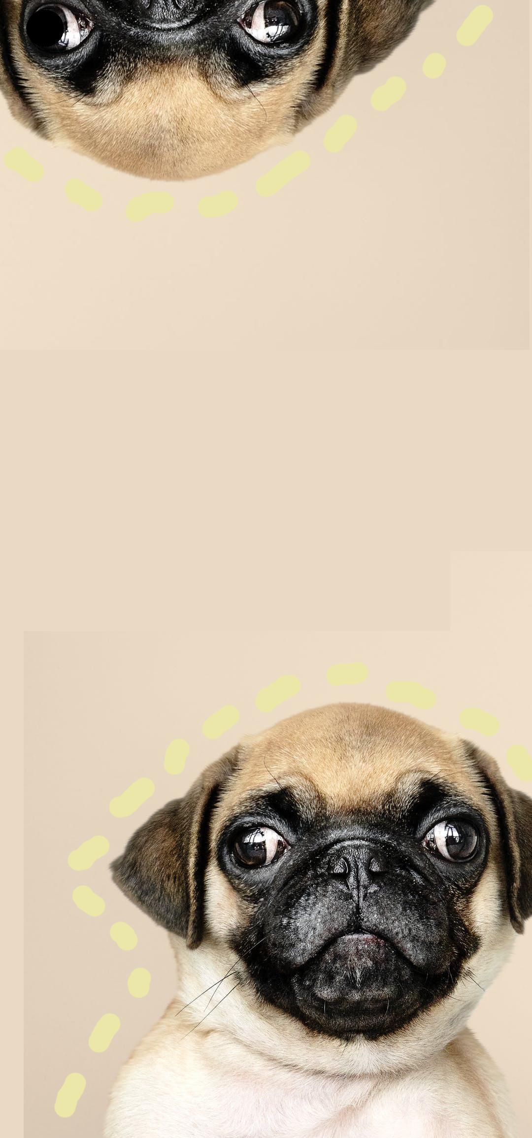 狗狗.png