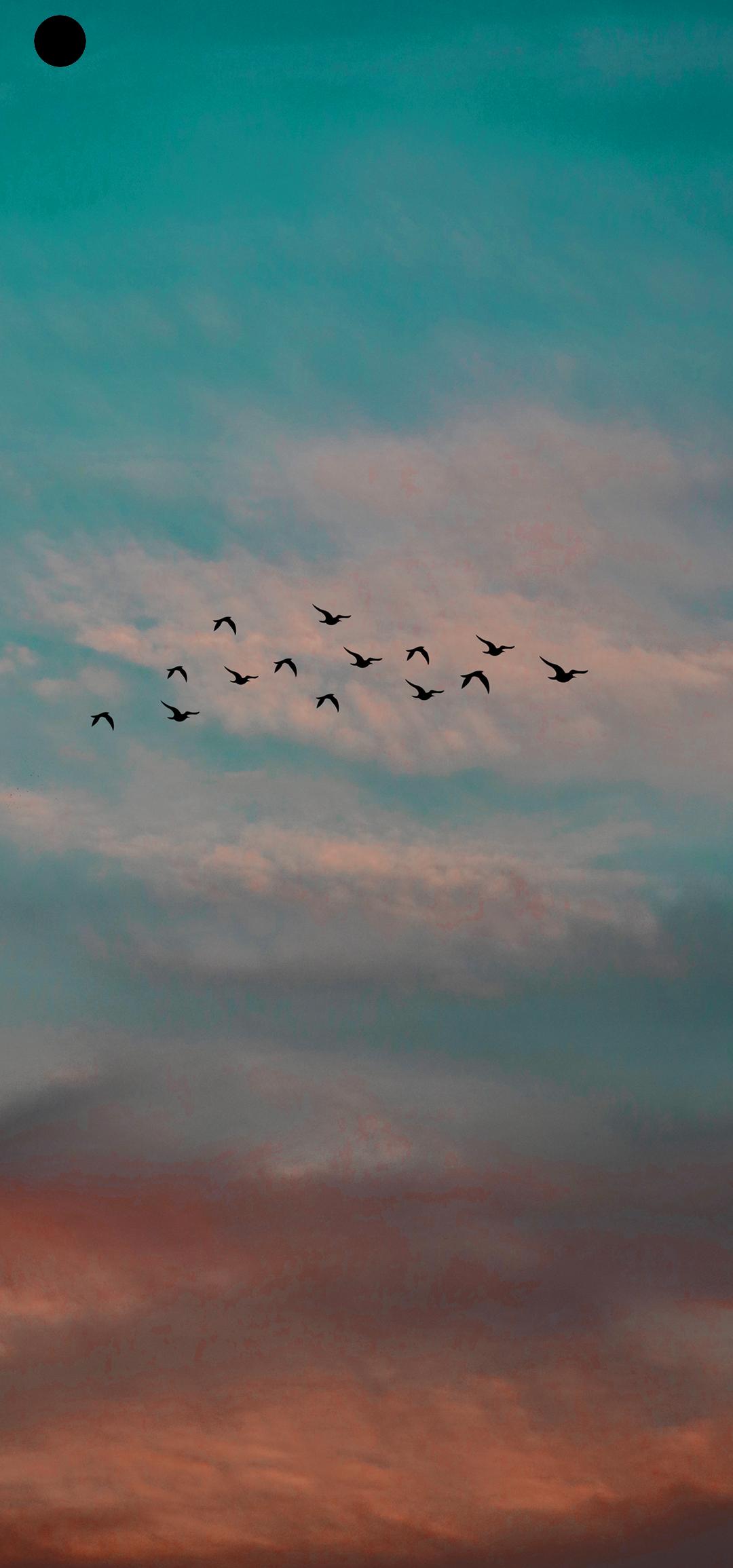 飞鸟.png