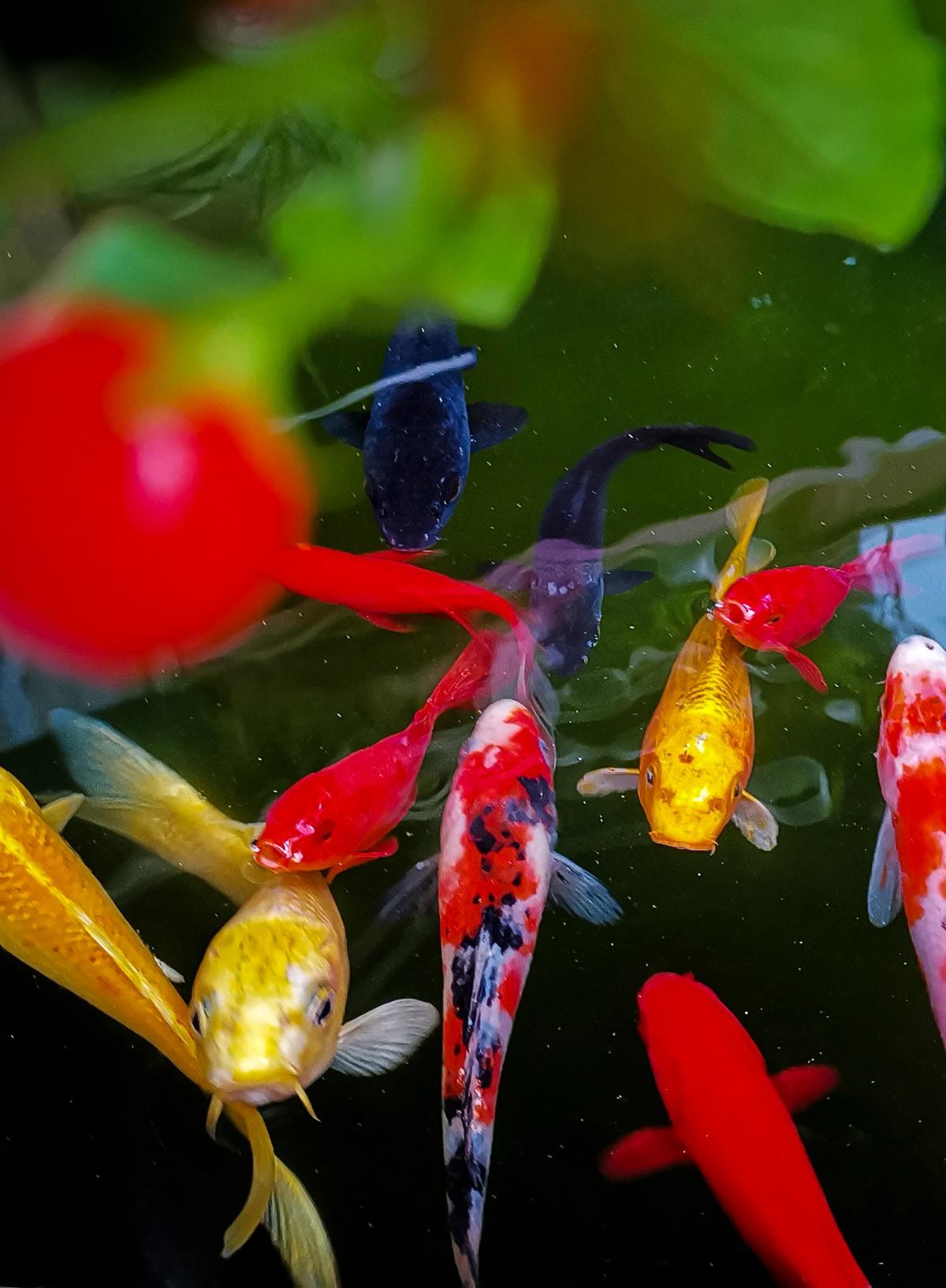 小鱼池随拍:闪着梦幻般色彩的童话会伴随一生1.jpg