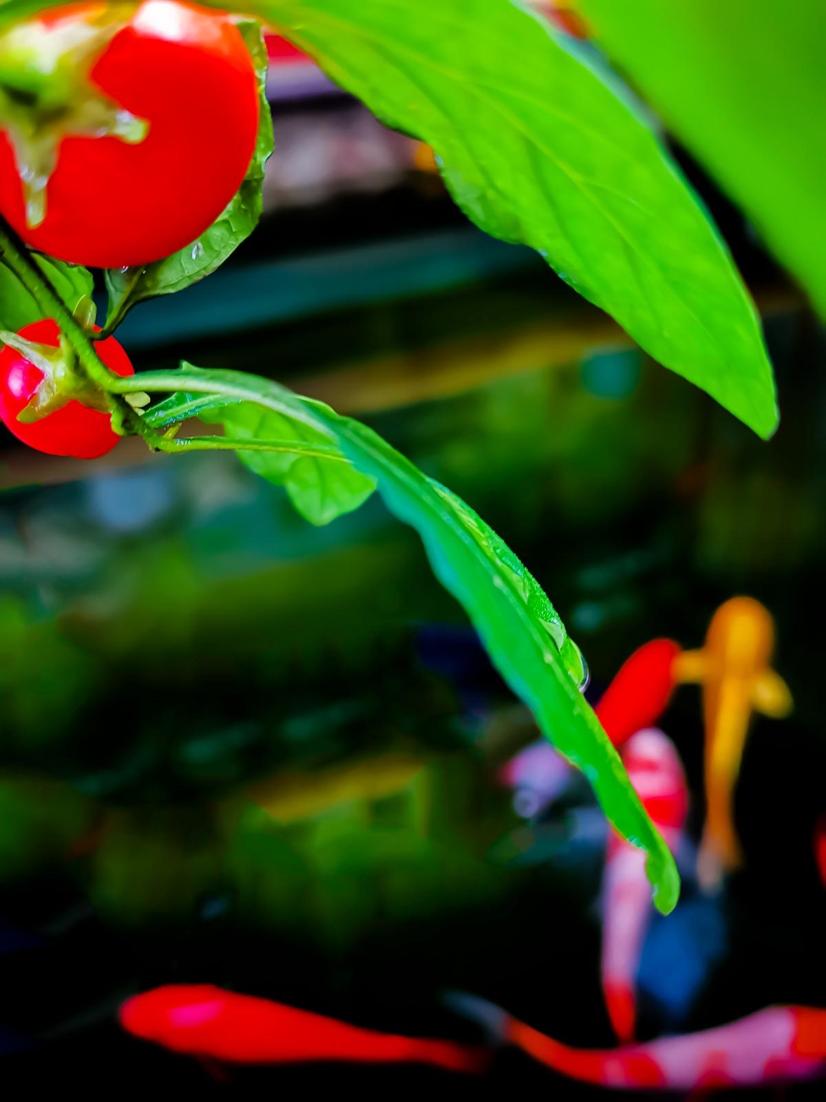 小鱼池随拍:闪着梦幻般色彩的童话会伴随一生6.jpg