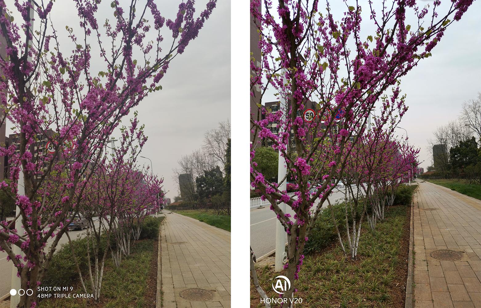 紫薇花.png
