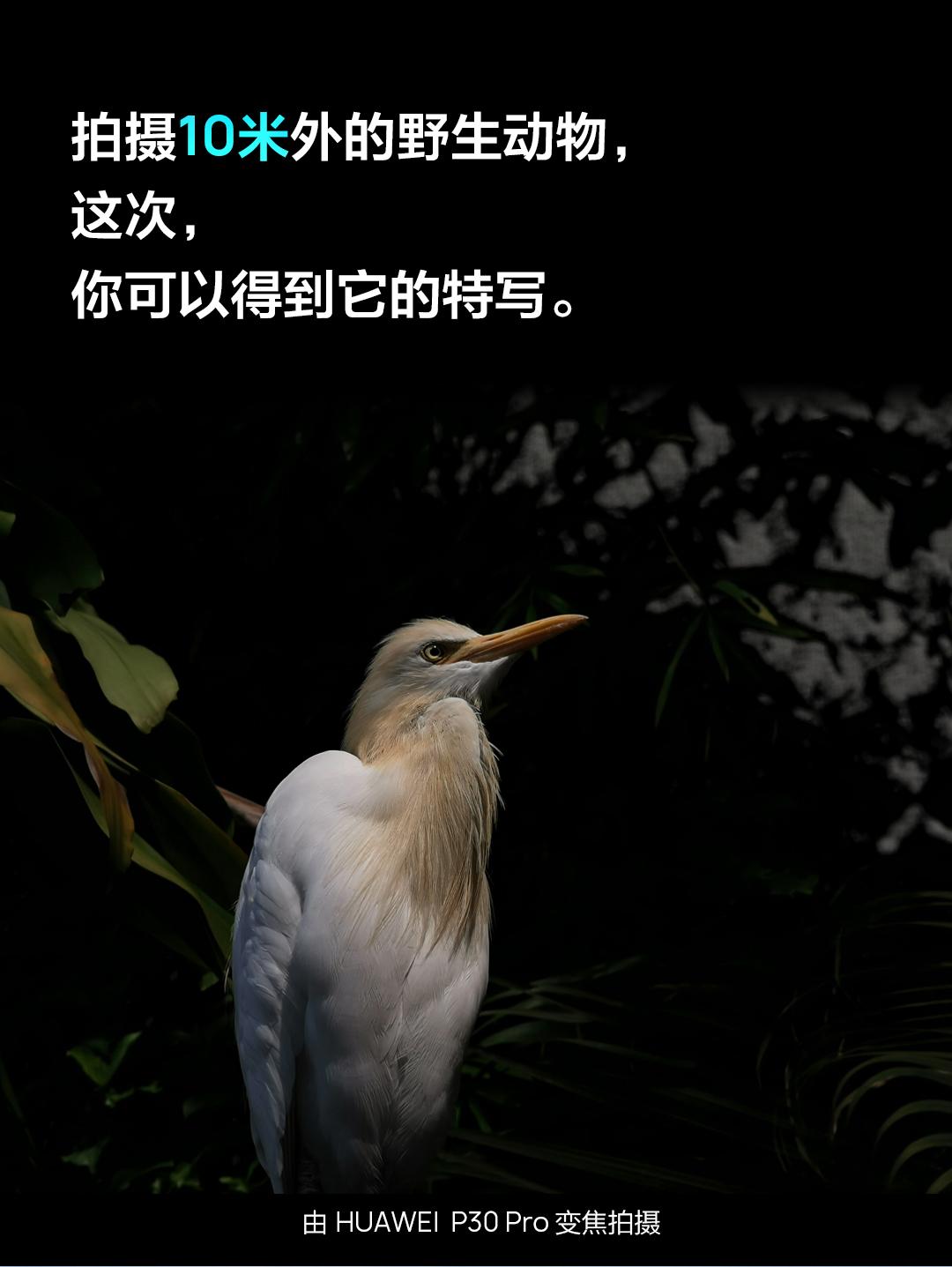 HUAWEI-P30中国区一张图_08.jpg