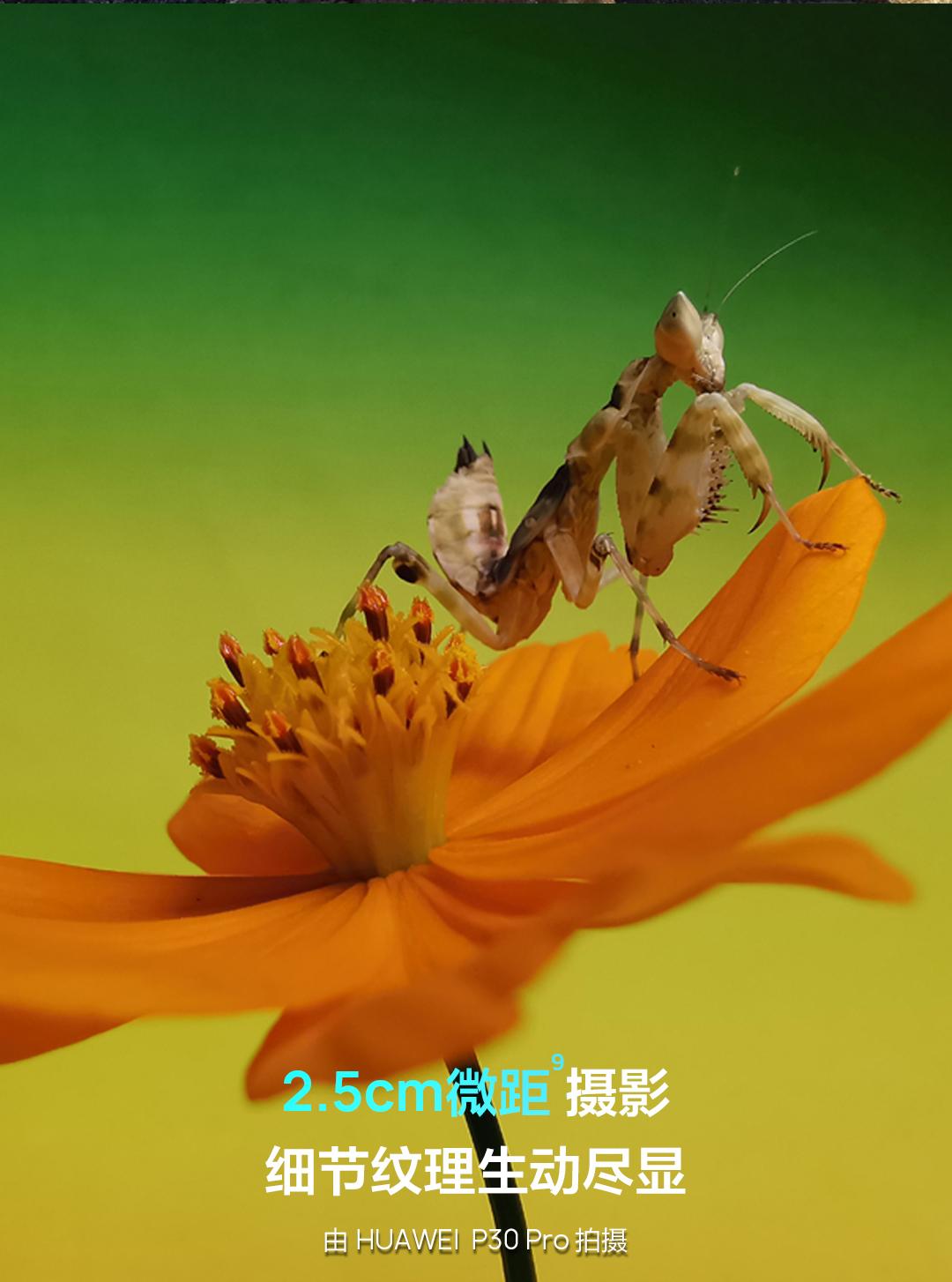 HUAWEI-P30中国区一张图_14.jpg