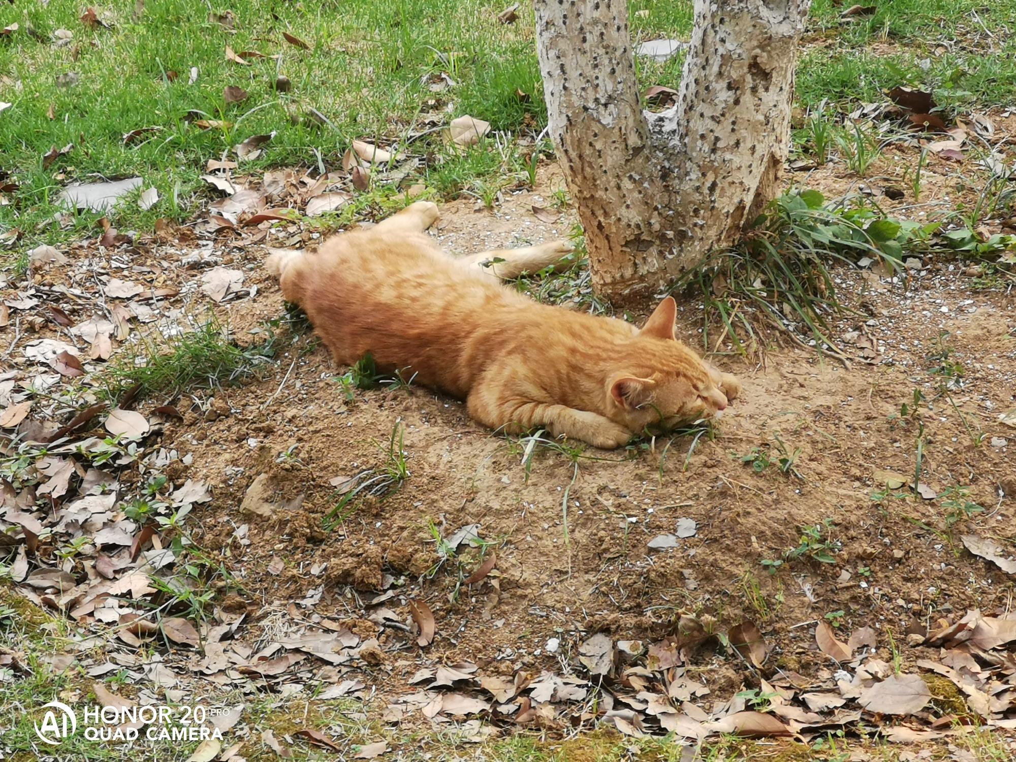 橘猫5.jpg