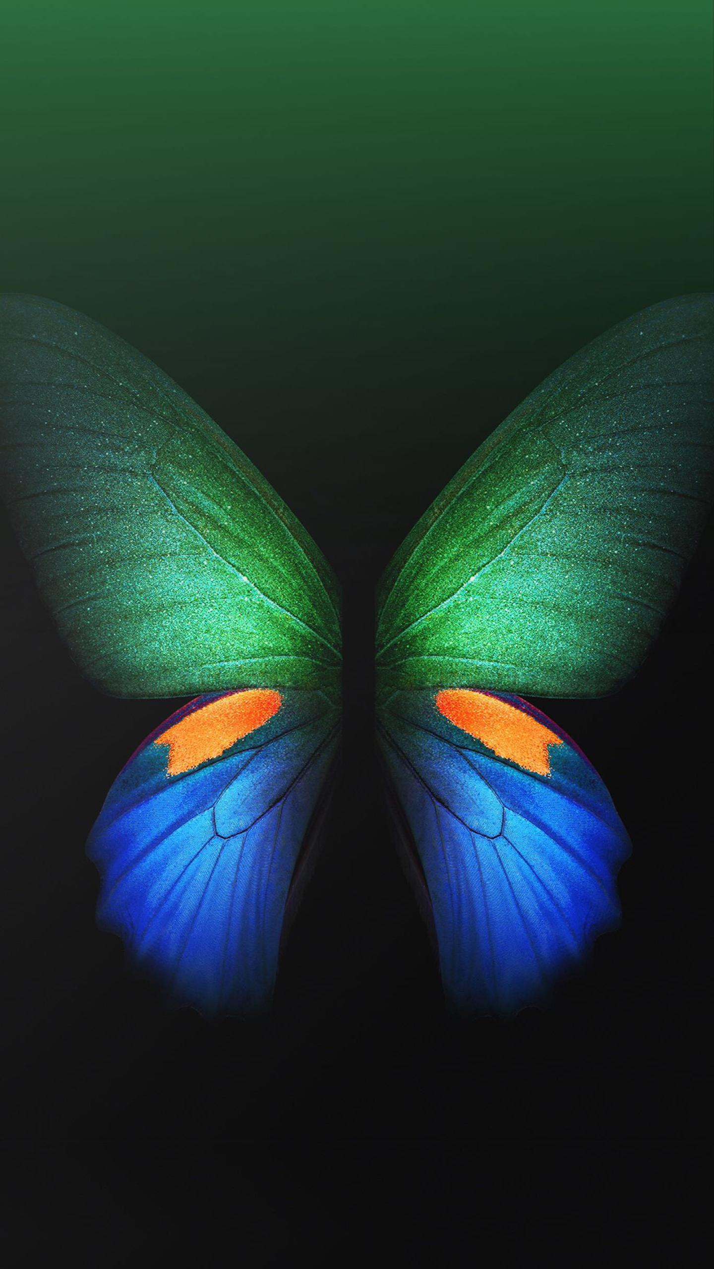 主题分享 两个主题分享 彩蝶 和 本物 更新 主题爱好者