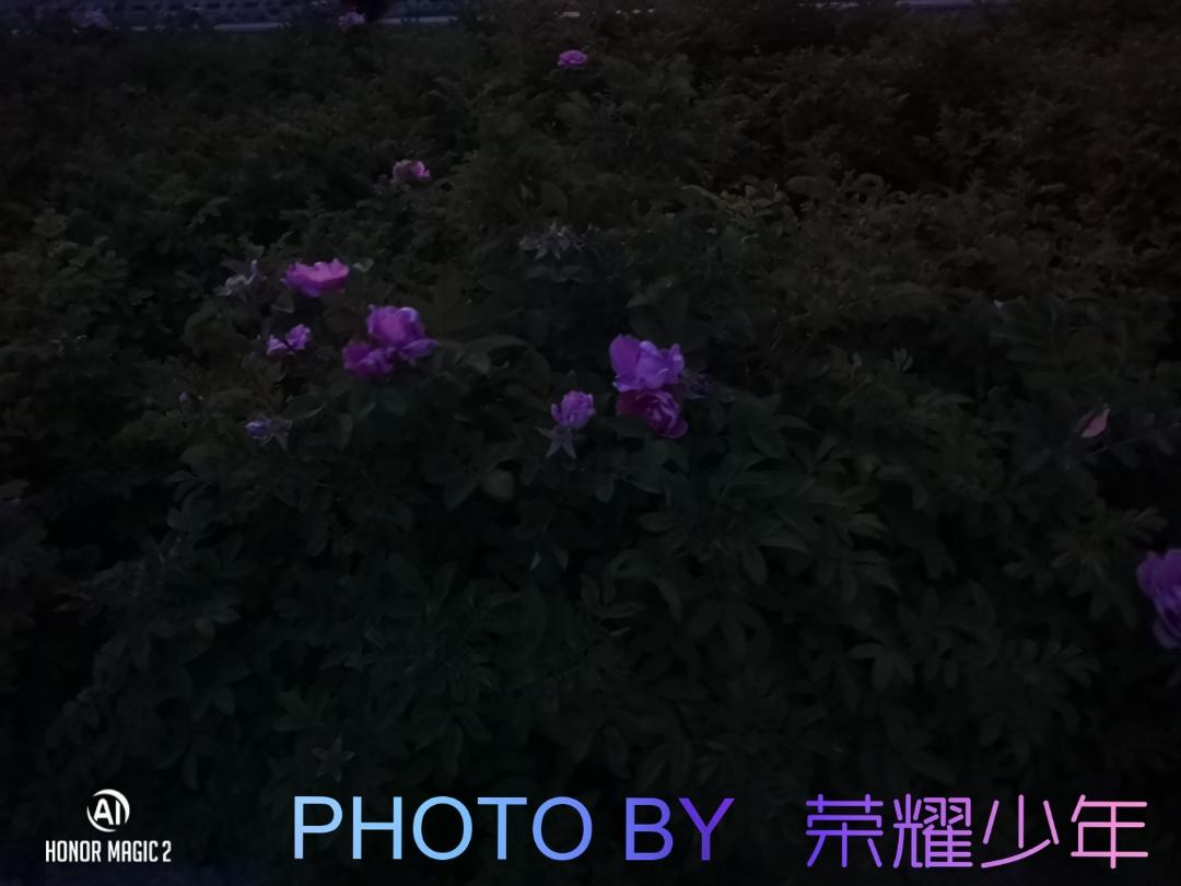 ArtCamera_1561868177500.jpg