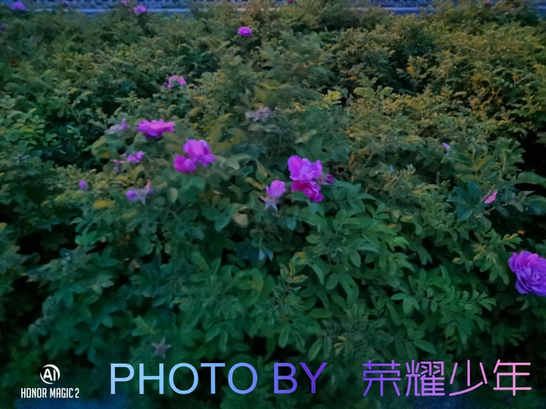 ArtCamera_1561868164034.jpg