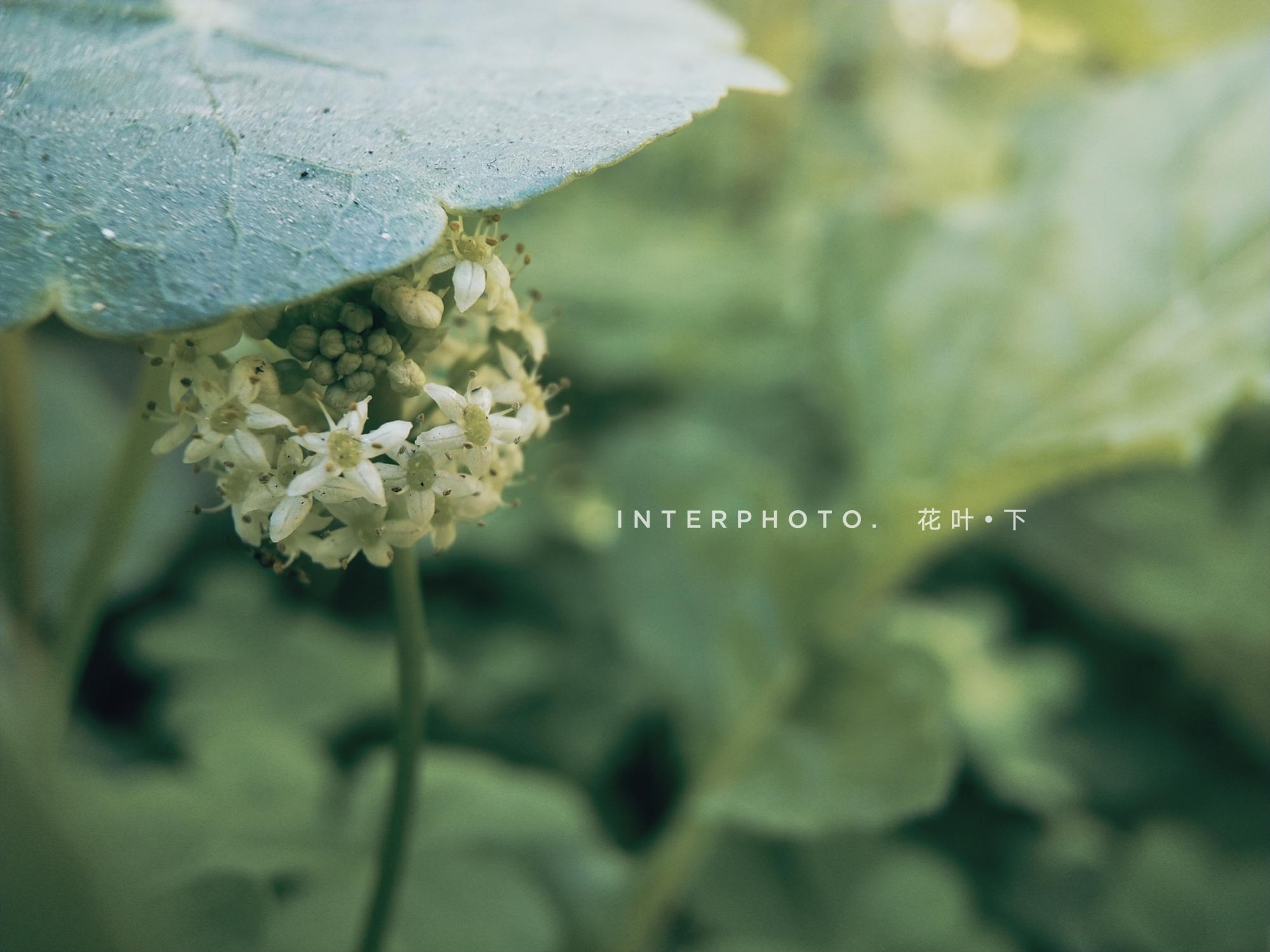InterPhoto_1580036398841.jpg