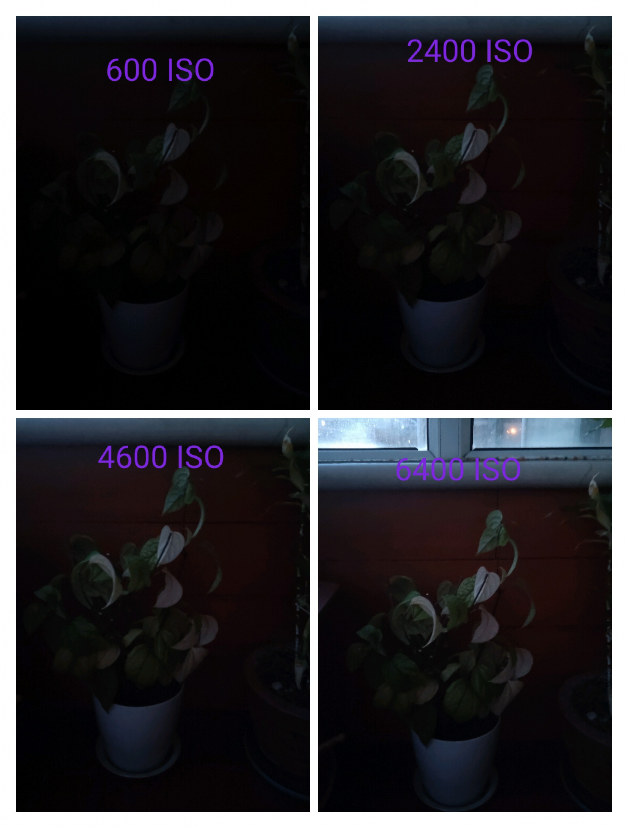 IMG_20200216_173002.jpg