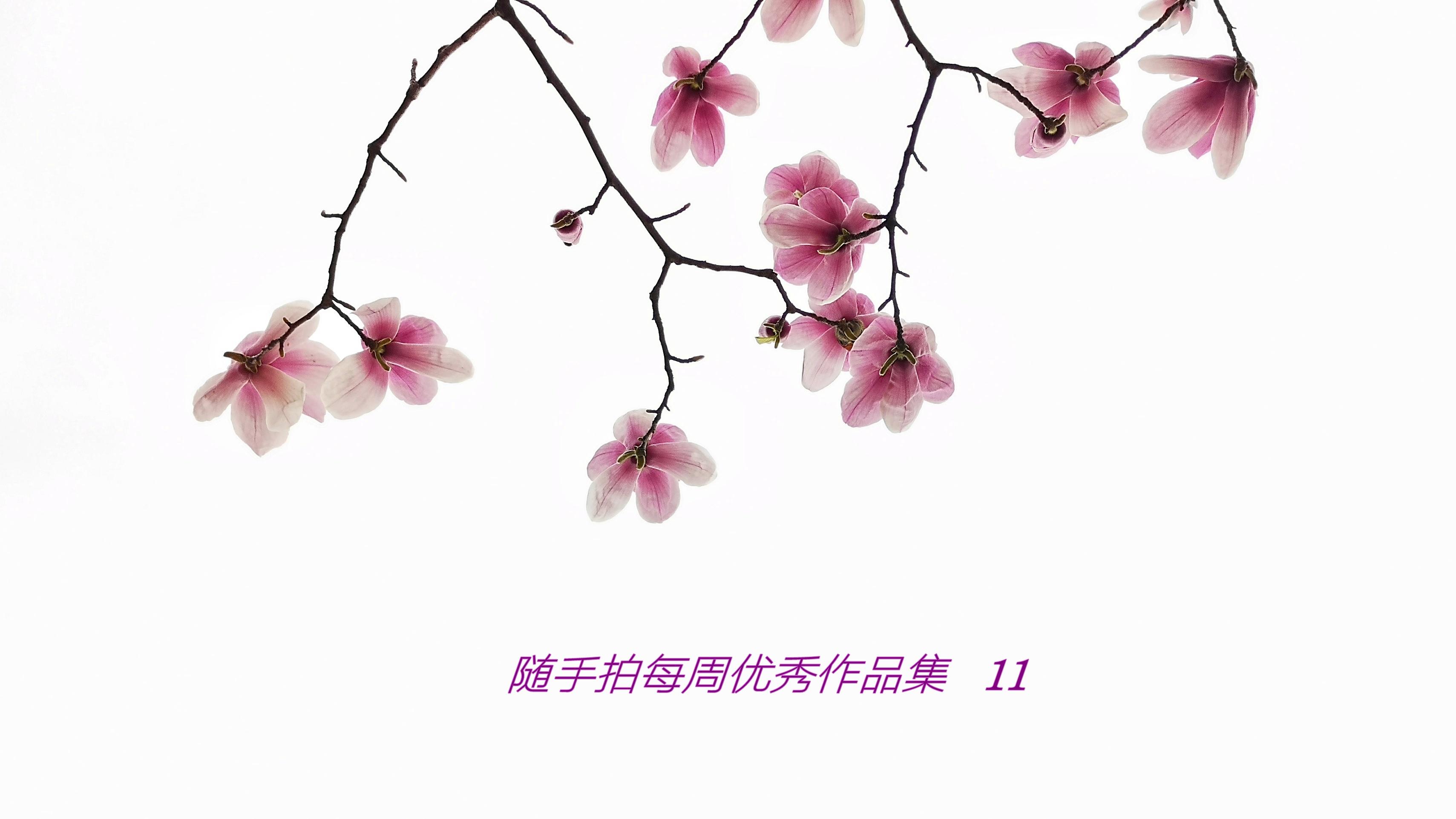 易水寒1971_副本.jpg