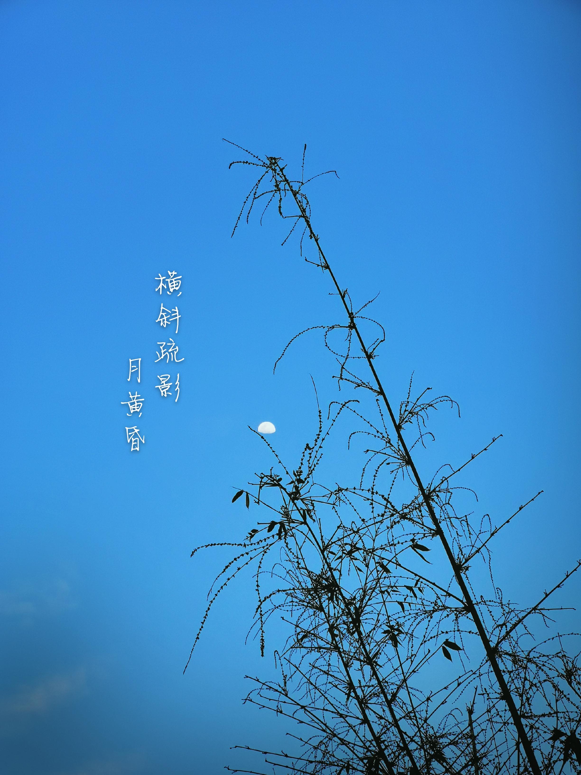 InterPhoto_1589699530313_mh1589700585685.jpg