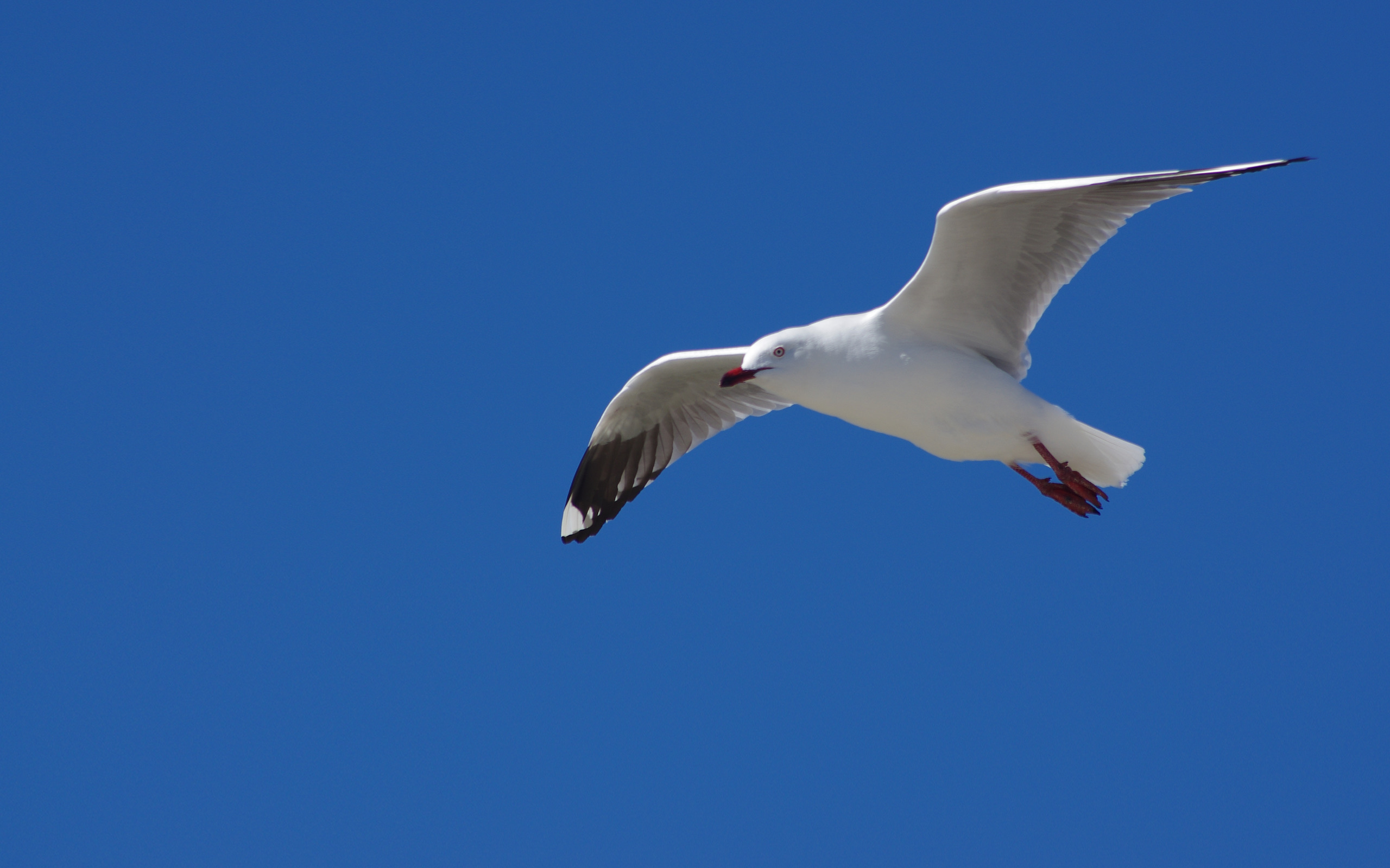 flying-bird2.jpg