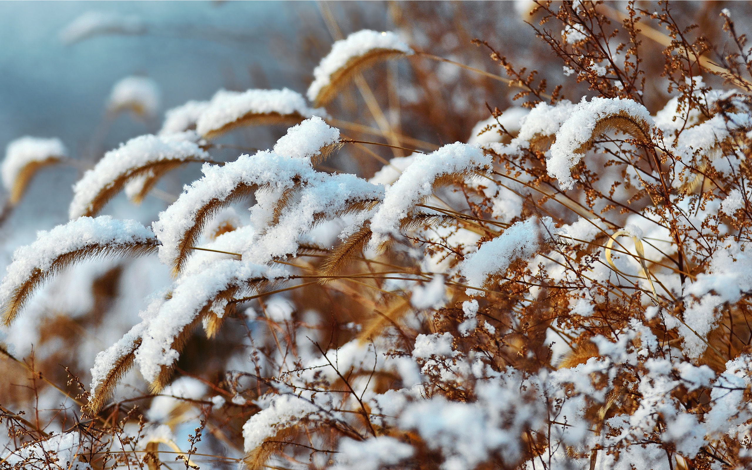 snow-love2.jpg