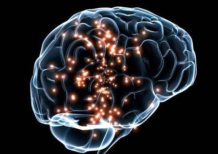 大脑.jpg