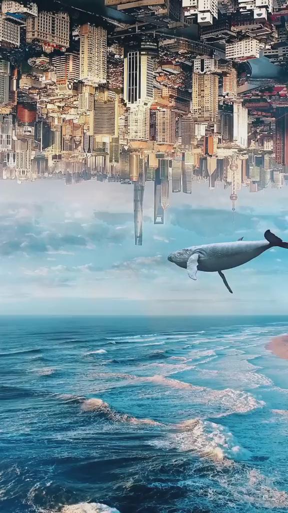 城市海洋.jpg
