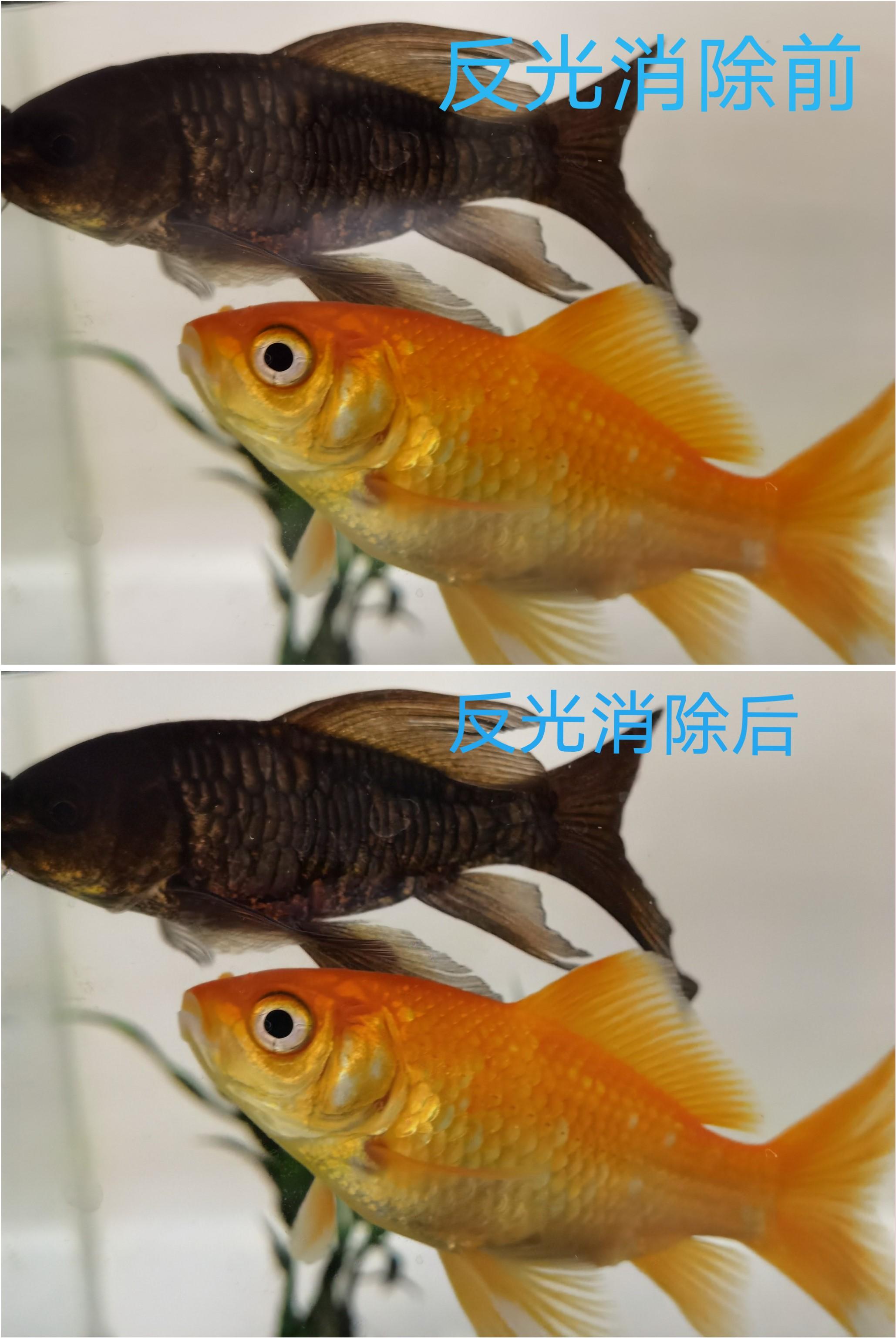 图11鱼缸.jpg