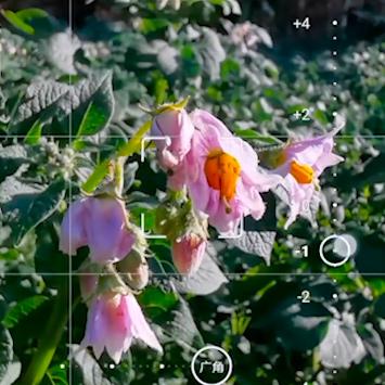 【P30Pro教程】试过这样拍超级微距吗?,花粉随手拍-花粉俱乐部