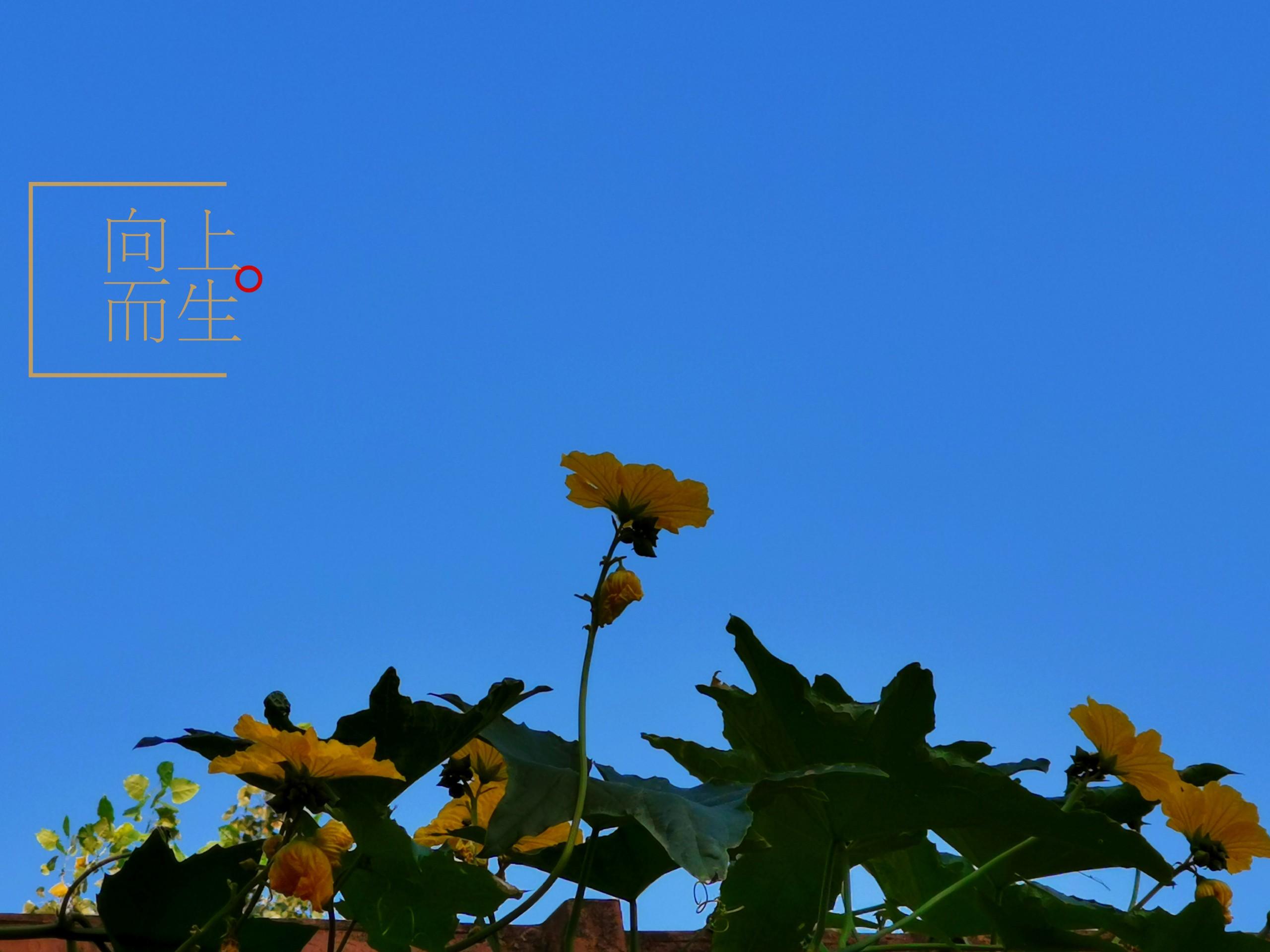 InterPhoto_1597795683877.jpg