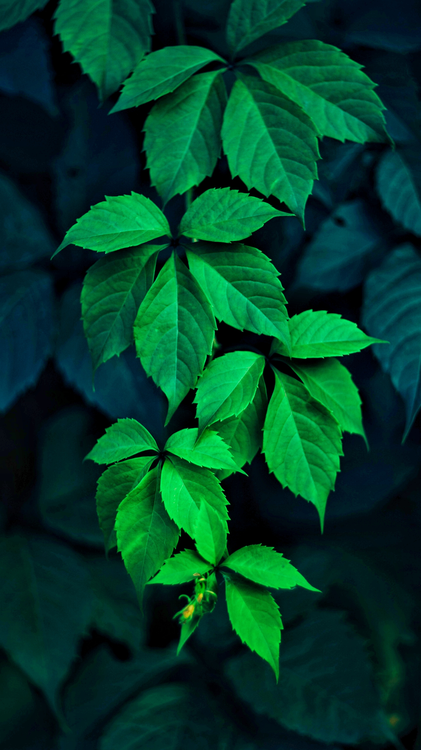 green_leaves.jpg