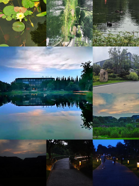 Collage_20210627_214245.jpg