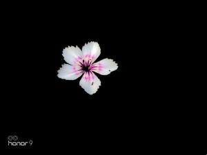 [花粉随手拍]新人优秀摄影合集,花粉随手拍-花粉俱乐部