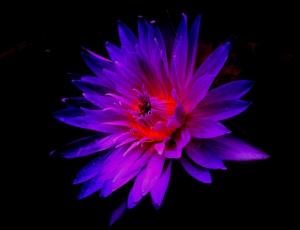【徕卡摄影】华为MATE系列手机摄影攻略-花卉篇,花粉摄影-花粉俱乐部