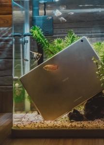 【欢•鱼】和热带鱼来一场奇异的水下旅行吧!,荣耀WaterPlay-花粉俱乐部