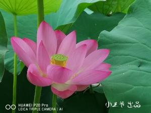 【小三爷评测】从照片中感受华为P20Pro徕卡三摄的魅力,华为P20系列-花粉俱乐部