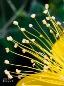 七月优秀花粉摄影合集,花粉随手拍-花粉俱乐部