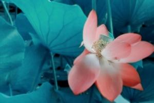 随手拍每周优秀作品集(27),花粉随手拍-花粉俱乐部