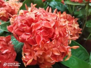 #荣耀20Pro#带上我的荣耀20Pro探索一番越秀,荣耀20系列-花粉俱乐部