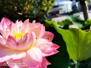 她早已把你看透-聊聊需要你去慢慢体会的P30Pro拍照,华为P30系列-花粉俱乐部