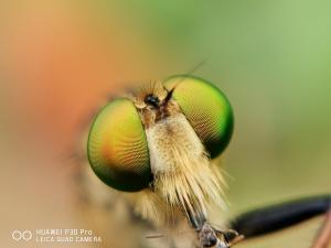 随手拍十月合辑之微距篇,花粉随手拍-花粉俱乐部