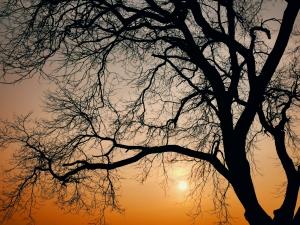 老树夕阳,花粉随手拍-花粉俱乐部