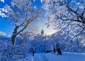 你在北方的寒夜里大雪纷飞,我在南方的艳阳里四季如春,花粉随手拍-花粉俱乐部