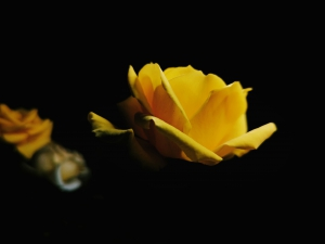 夜色芬芳,花粉随手拍-花粉俱乐部