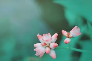 摄影 | 春意渐浓,花香满城,你们要的大片来了——,花粉随手拍-花粉俱乐部