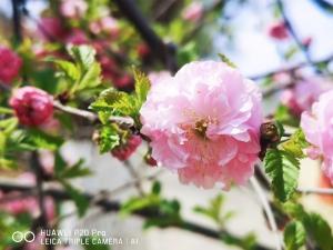 【华为P20pro】春暖花开,花粉随手拍-花粉俱乐部