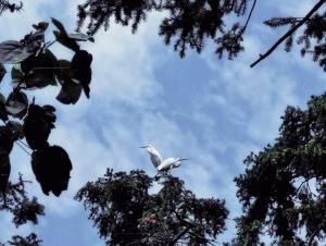 【nova7体验】鄱阳湖畔象山森林公园,这里是鹭鸟的天堂,花粉随手拍-花粉俱乐部