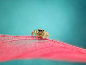 挑战萌宠!原来蜘蛛也能这么萌!,花粉随手拍-花粉俱乐部