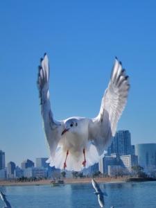 碧海群鱼跃,蓝天鸥鸟飞,花粉随手拍-花粉俱乐部