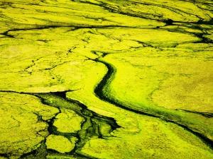 千里麦田~水藻,花粉随手拍-花粉俱乐部